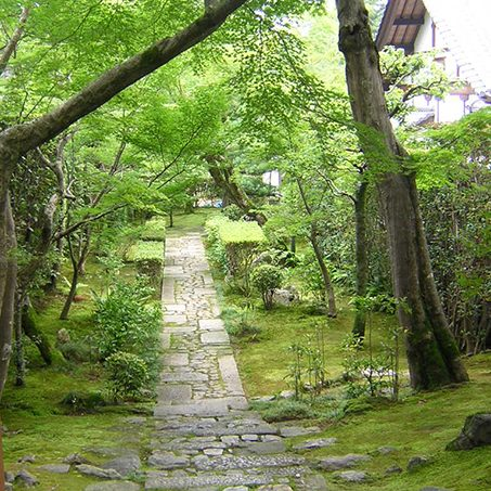 Forest scenery in Kyoto Japan