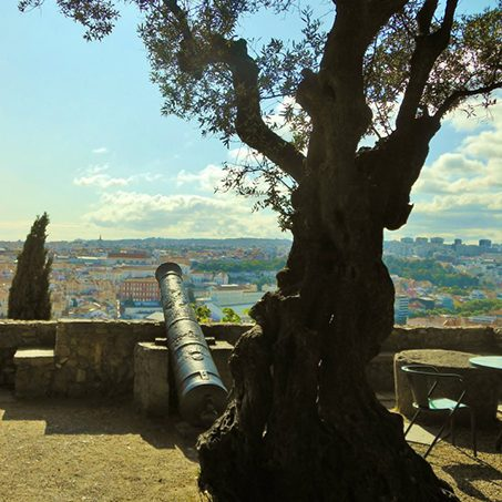 Cannon resting on a wall by tree